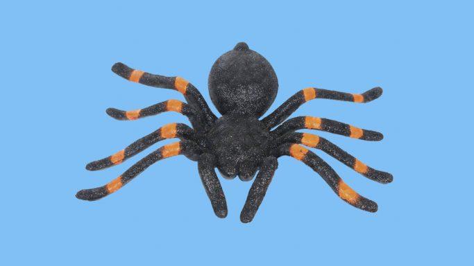 Evde Gördüğümüz Örümcekleri Neden Öldürmemeliyiz?